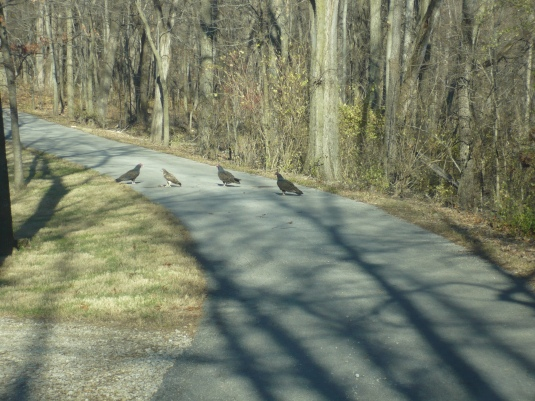 hawk and vultures 3